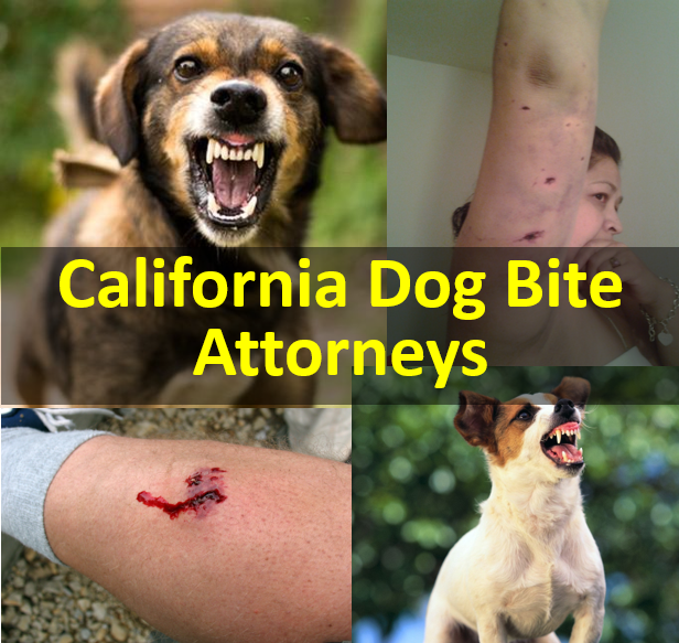 california dog bite attorneys